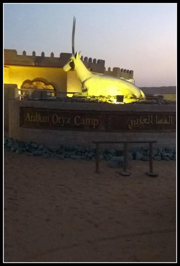 The Arabian Oryx Camp