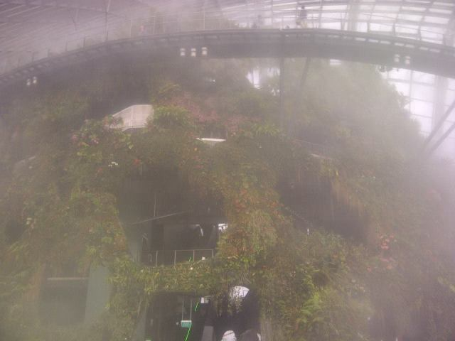 In the Cloud Forest, the cool moist air relaxes you